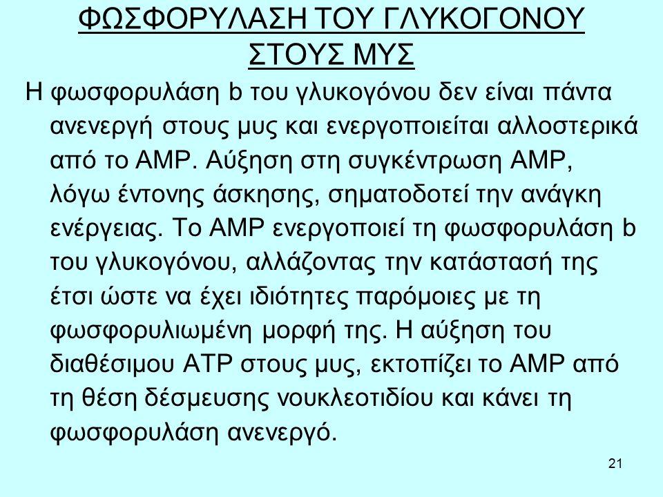 21 ΦΩΣΦΟΡΥΛΑΣΗ ΤΟΥ ΓΛΥΚΟΓΟΝΟΥ ΣΤΟΥΣ ΜΥΣ Η φωσφορυλάση b του γλυκογόνου δεν είναι πάντα ανενεργή στους μυς και ενεργοποιείται αλλοστερικά από το AMP. Α