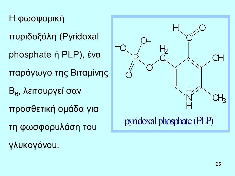 25 Η φωσφορική πυριδοξάλη (Pyridoxal phosphate ή PLP), ένα παράγωγο της Βιταμίνης B 6, λειτουργεί σαν προσθετική ομάδα για τη φωσφορυλάση του γλυκογόν
