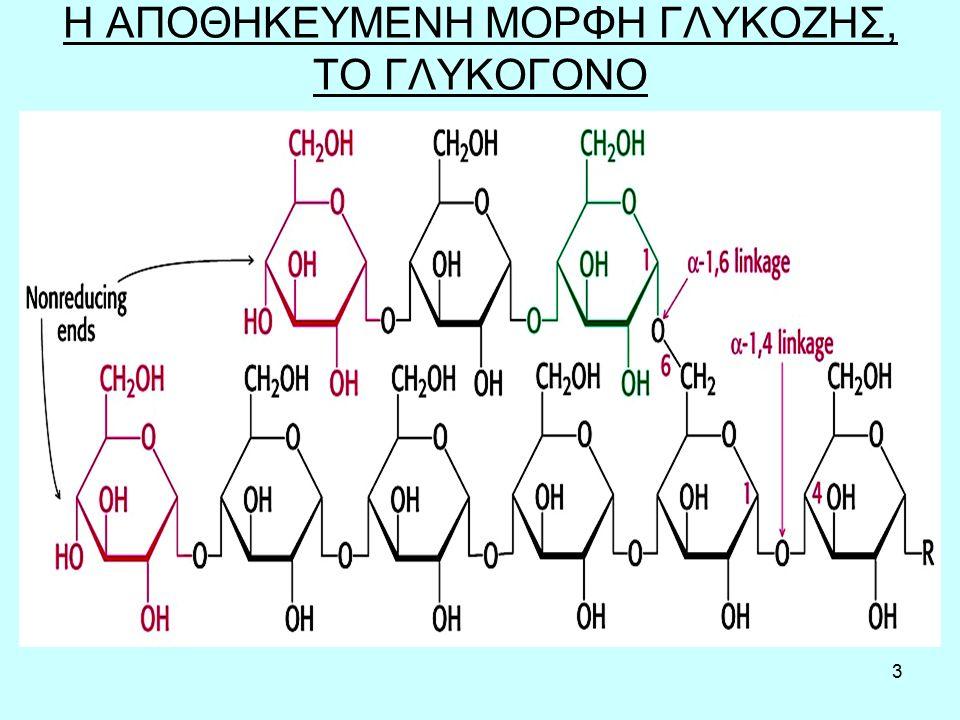 14 Αναπλήρωση αποθεμάτων γλυκογόνου μετά την άσκηση Ο χρόνος κατανάλωσης υδατανθράκων παίζει ρόλο στο ρυθμό σύνθεσης γλυκογόνου.