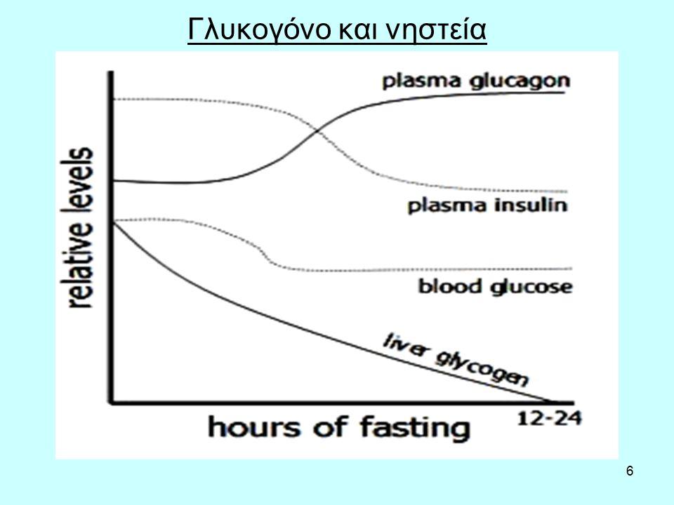 7 Ηπατικό γλυκογόνο και γεύματα