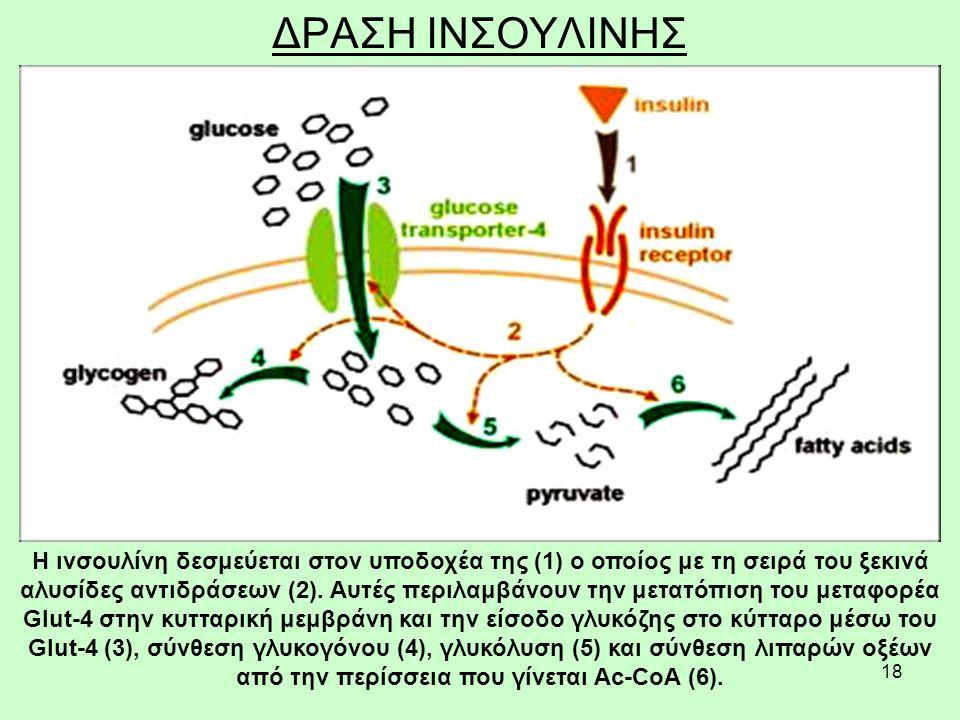 18 ΔΡΑΣΗ ΙΝΣΟΥΛΙΝΗΣ Η ινσουλίνη δεσμεύεται στον υποδοχέα της (1) ο οποίος με τη σειρά του ξεκινά αλυσίδες αντιδράσεων (2).