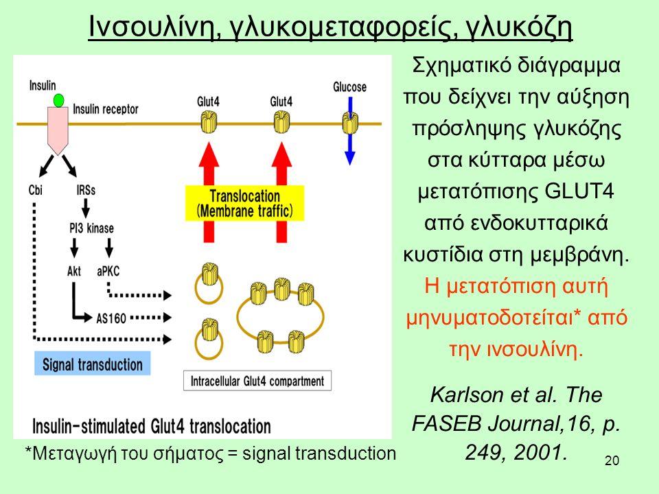 20 Ινσουλίνη, γλυκομεταφορείς, γλυκόζη Σχηματικό διάγραμμα που δείχνει την αύξηση πρόσληψης γλυκόζης στα κύτταρα μέσω μετατόπισης GLUT4 από ενδοκυτταρικά κυστίδια στη μεμβράνη.