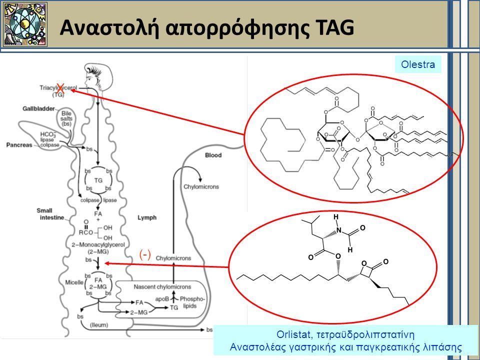 Αναστολή απορρόφησης TAG Orlistat, τετραϋδρολιπστατίνη Αναστολέας γαστρικής και παγκρεατικής λιπάσης (-) Olestra X