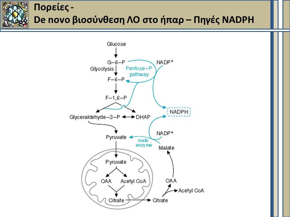 Πορείες - De novo βιοσύνθεση ΛΟ στο ήπαρ – Πηγές ΝΑDPH