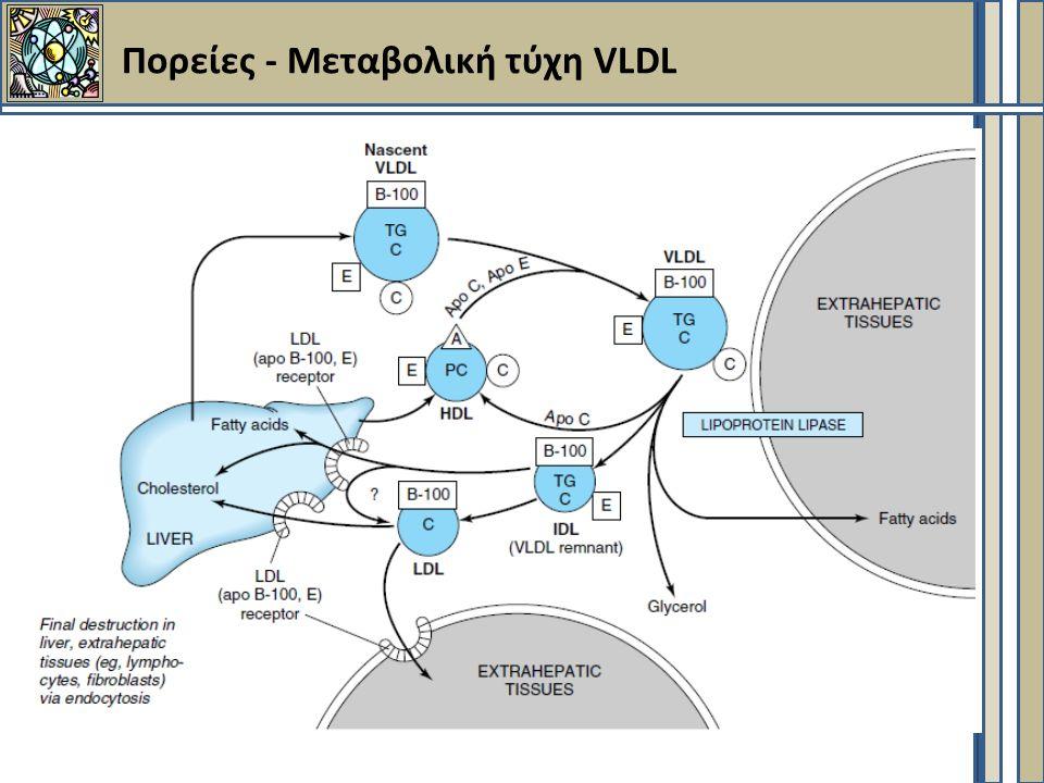 Πορείες - Μεταβολική τύχη VLDL