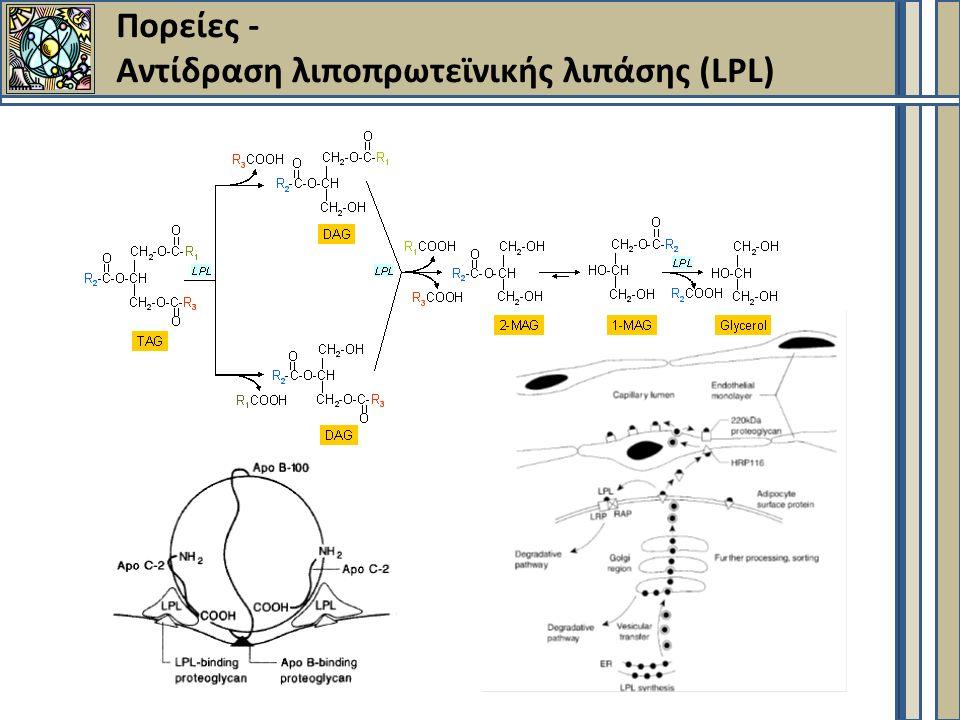Πορείες - Aντίδραση λιποπρωτεϊνικής λιπάσης (LPL)