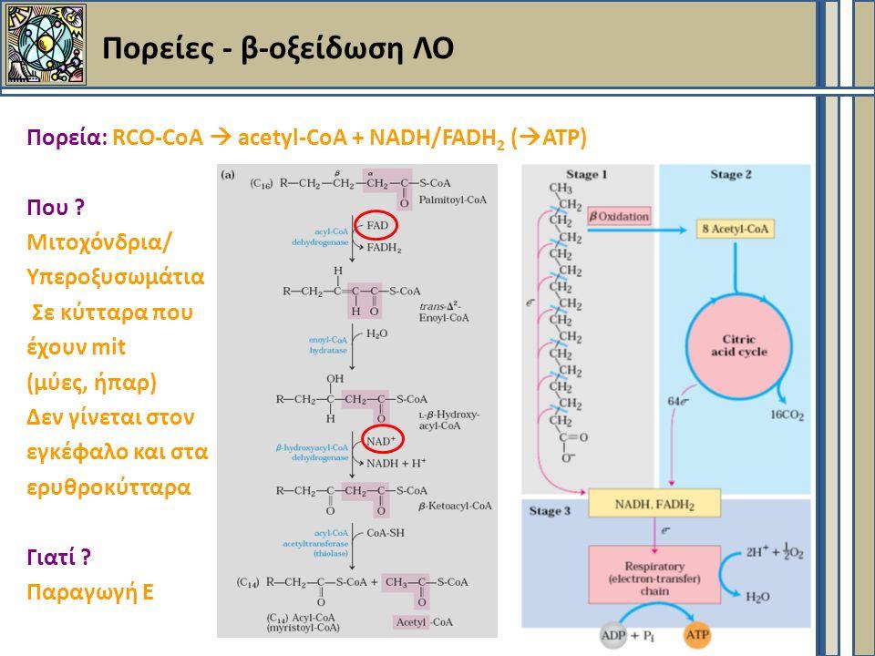 Πορείες - β-οξείδωση ΛΟ Πορεία: RCO-CoA  acetyl-CoA + NADH/FADH 2 (  ATP) Που .