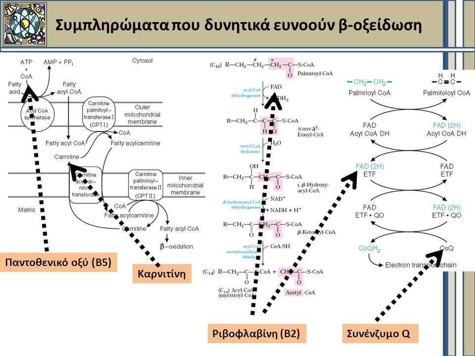 Συμπληρώματα που δυνητικά ευνοούν β-οξείδωση Καρνιτίνη Ριβοφλαβίνη (Β2) Παντοθενικό οξύ (Β5) Συνένζυμο Q