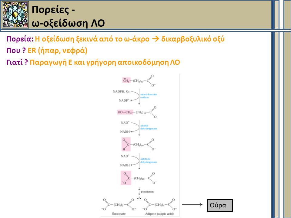 Πορείες - ω-οξείδωση ΛΟ Πορεία: Η οξείδωση ξεκινά από το ω-άκρο  δικαρβοξυλικό οξύ Που .
