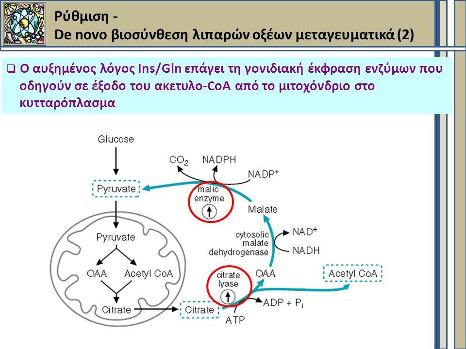 Ρύθμιση - De novo βιοσύνθεση λιπαρών οξέων μεταγευματικά (2)  Ο αυξημένος λόγος Ins/Gln επάγει τη γονιδιακή έκφραση ενζύμων που οδηγούν σε έξοδο του ακετυλο-CoA από το μιτοχόνδριο στο κυτταρόπλασμα