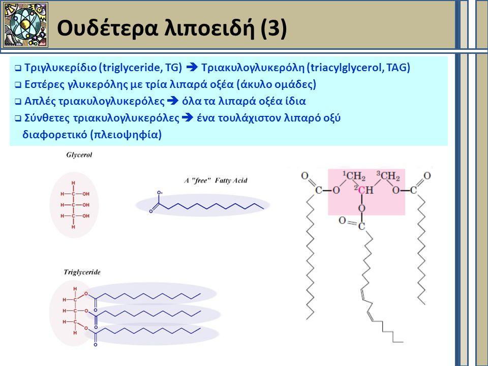 Ουδέτερα λιποειδή (3)  Τριγλυκερίδιο (triglyceride, TG)  Τριακυλογλυκερόλη (triacylglycerol, TAG)  Εστέρες γλυκερόλης με τρία λιπαρά οξέα (άκυλο ομάδες)  Απλές τριακυλογλυκερόλες  όλα τα λιπαρά οξέα ίδια  Σύνθετες τριακυλογλυκερόλες  ένα τουλάχιστον λιπαρό οξύ διαφορετικό (πλειοψηφία)