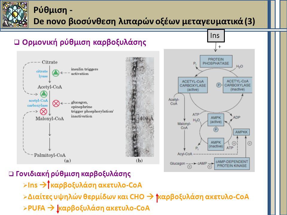  Ορμονική ρύθμιση καρβοξυλάσης  Γονιδιακή ρύθμιση καρβοξυλάσης  Ins  καρβοξυλάση ακετυλο-CoA  Διαίτες υψηλών θερμίδων και CHO  καρβοξυλάση ακετυλο-CoA  PUFA  καρβοξυλάση ακετυλο-CoA Ins + Ρύθμιση - De novo βιοσύνθεση λιπαρών οξέων μεταγευματικά (3)