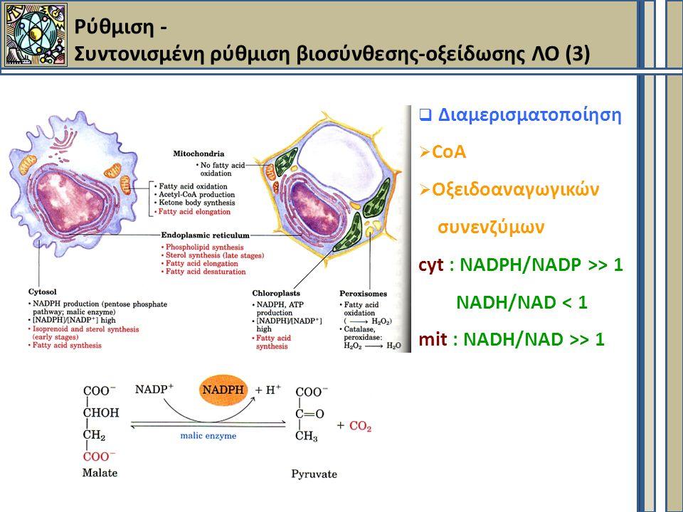  Διαμερισματοποίηση  CoA  Oξειδοαναγωγικών συνενζύμων cyt : NADPH/NADP >> 1 NADH/NAD < 1 mit : NADH/NAD >> 1 Ρύθμιση - Συντονισμένη ρύθμιση βιοσύνθεσης-οξείδωσης ΛΟ (3)