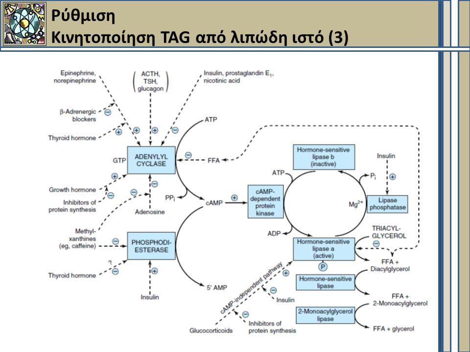 Ρύθμιση Κινητοποίηση TAG από λιπώδη ιστό (3)