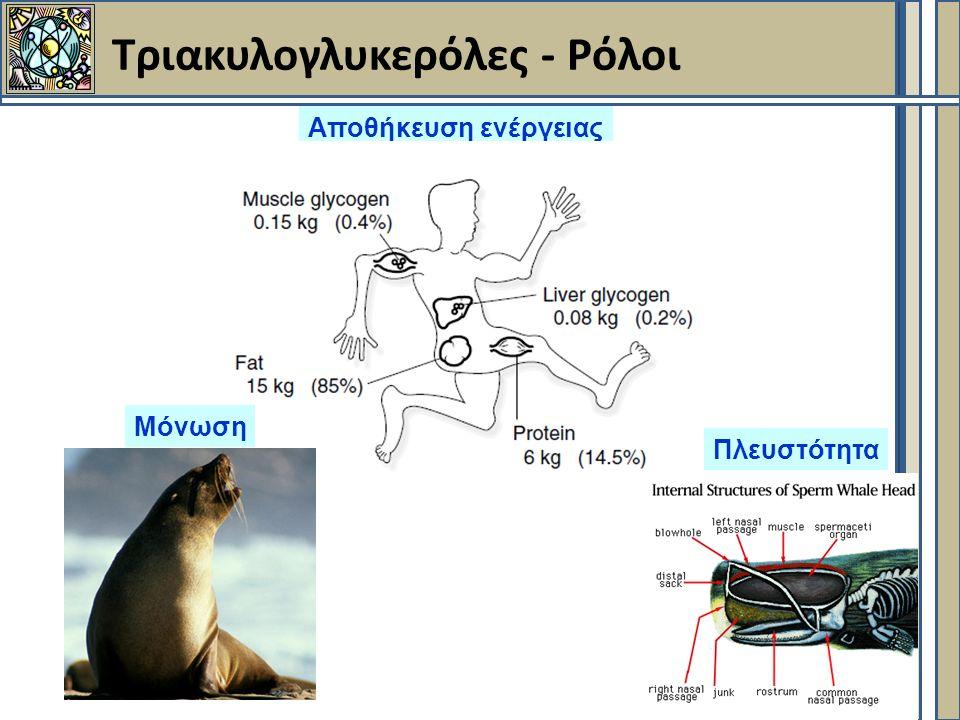 Τριακυλογλυκερόλες - Ρόλοι Αποθήκευση ενέργειας Πλευστότητα Μόνωση