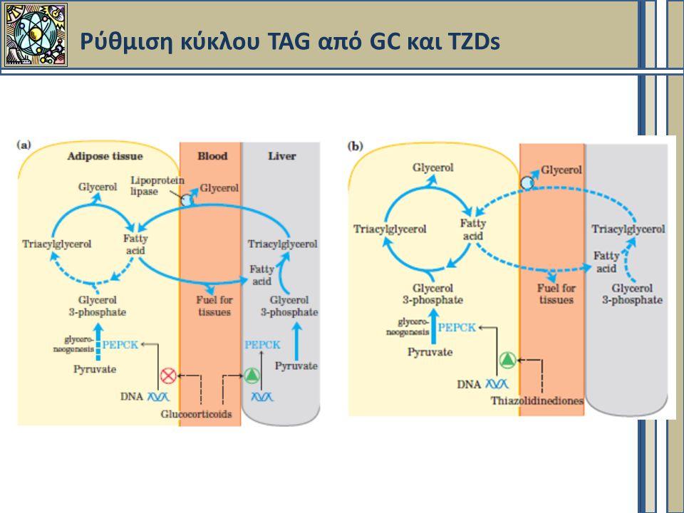 Ρύθμιση κύκλου TAG από GC και TZDs