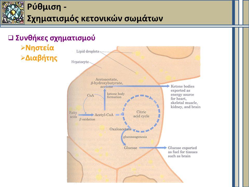 Ρύθμιση - Σχηματισμός κετονικών σωμάτων  Συνθήκες σχηματισμού  Νηστεία  Διαβήτης