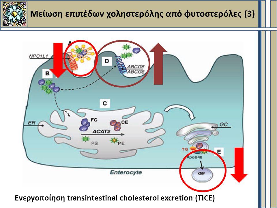 Μείωση επιπέδων χοληστερόλης από φυτοστερόλες (3) Ενεργοποίηση transintestinal cholesterol excretion (TICE)
