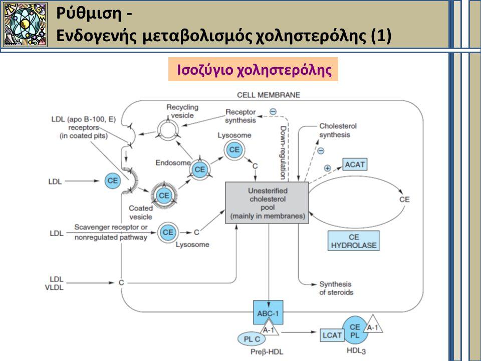 Ρύθμιση - Ενδογενής μεταβολισμός χοληστερόλης (1) Ισοζύγιο χοληστερόλης