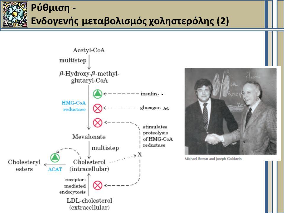 Ρύθμιση - Ενδογενής μεταβολισμός χοληστερόλης (2),Τ3,GC