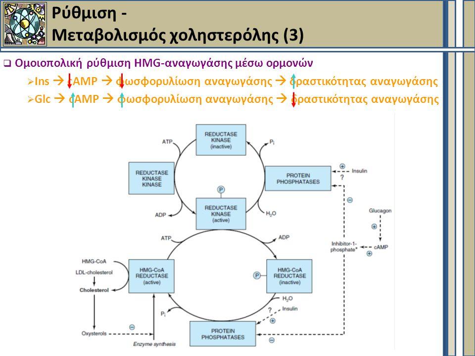  Ομοιοπολική ρύθμιση HMG-αναγωγάσης μέσω ορμονών  Ins  cAMP  φωσφορυλίωση αναγωγάσης  δραστικότητας αναγωγάσης  Glc  cAMP  φωσφορυλίωση αναγωγάσης  δραστικότητας αναγωγάσης Ρύθμιση - Μεταβολισμός χοληστερόλης (3)