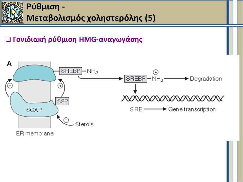  Γονιδιακή ρύθμιση HMG-αναγωγάσης Ρύθμιση - Μεταβολισμός χοληστερόλης (5)