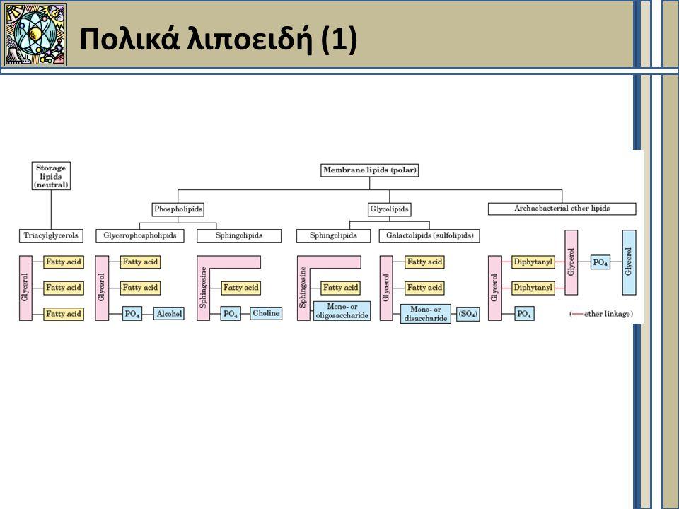 Πολικά λιποειδή (2)