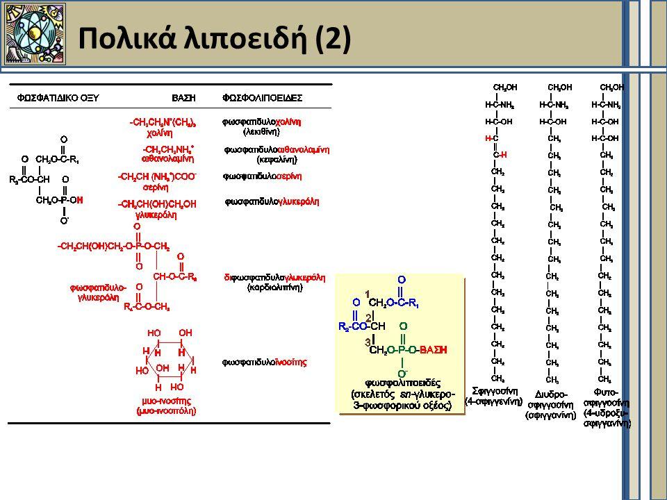 Πορείες - Βιοσύνθεση ακόρεστων ΛΟ/ΛΟ με περισσότερα από 16C Πορεία: Παλμιτικό οξύ  ακόρεστα ΛΟ, ΛΟ (C>18) Που .