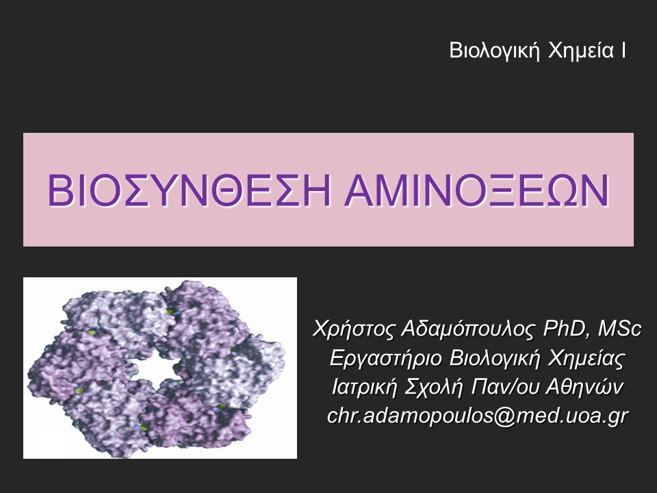Εισαγωγή Τα περισσότερα βακτήρια και φυτά μπορούν να συνθέσουν και τα 20 αμινοξέα Τα περισσότερα βακτήρια και φυτά μπορούν να συνθέσουν και τα 20 αμινοξέα Τα θηλαστικά μπορούν να συνθέσουν περίπου τα μισά («μη απαραίτητα αμινοξέα») Τα θηλαστικά μπορούν να συνθέσουν περίπου τα μισά («μη απαραίτητα αμινοξέα») Τα υπόλοιπα πρέπει να τα λαμβάνουν με τη διατροφή («απαραίτητα αμινοξέα») Τα υπόλοιπα πρέπει να τα λαμβάνουν με τη διατροφή («απαραίτητα αμινοξέα»)