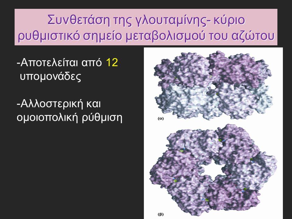 Συνθετάση της γλουταμίνης- κύριο ρυθμιστικό σημείο μεταβολισμού του αζώτου -Αποτελείται από 12 υπομονάδες -Αλλοστερική και ομοιοπολική ρύθμιση