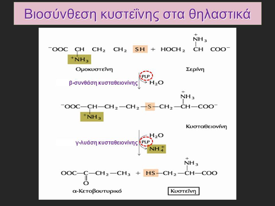 Βιοσύνθεση κυστεΐνης στα θηλαστικά β-συνθάση κυσταθειονίνης γ-λυάση κυσταθειονίνης
