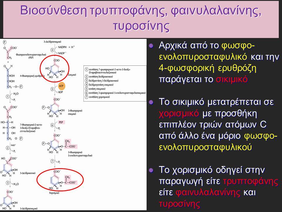 Βιοσύνθεση τρυπτοφάνης, φαινυλαλανίνης, τυροσίνης Αρχικά από το φωσφο- ενολοπυροσταφυλικό και την 4-φωσφορική ερυθρόζη παράγεται το σικιμικό Αρχικά από το φωσφο- ενολοπυροσταφυλικό και την 4-φωσφορική ερυθρόζη παράγεται το σικιμικό Το σικιμικό μετατρέπεται σε χορισμικό με προσθήκη επιπλέον τριών ατόμων C από άλλο ένα μόριο φωσφο- ενολοπυροσταφυλικού Το σικιμικό μετατρέπεται σε χορισμικό με προσθήκη επιπλέον τριών ατόμων C από άλλο ένα μόριο φωσφο- ενολοπυροσταφυλικού Το χορισμικό οδηγεί στην παραγωγή είτε τρυπτοφάνης είτε φαινυλαλανίνης και τυροσίνης Το χορισμικό οδηγεί στην παραγωγή είτε τρυπτοφάνης είτε φαινυλαλανίνης και τυροσίνης