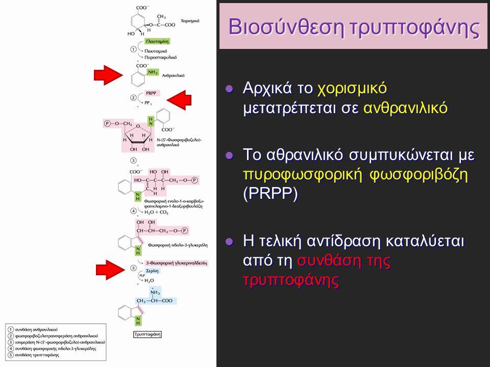 Βιοσύνθεση τρυπτοφάνης Αρχικά το χορισμικό μετατρέπεται σε ανθρανιλικό Αρχικά το χορισμικό μετατρέπεται σε ανθρανιλικό Το αθρανιλικό συμπυκώνεται με πυροφωσφορική φωσφοριβόζη (PRPP) Το αθρανιλικό συμπυκώνεται με πυροφωσφορική φωσφοριβόζη (PRPP) Η τελική αντίδραση καταλύεται από τη συνθάση της τρυπτοφάνης Η τελική αντίδραση καταλύεται από τη συνθάση της τρυπτοφάνης