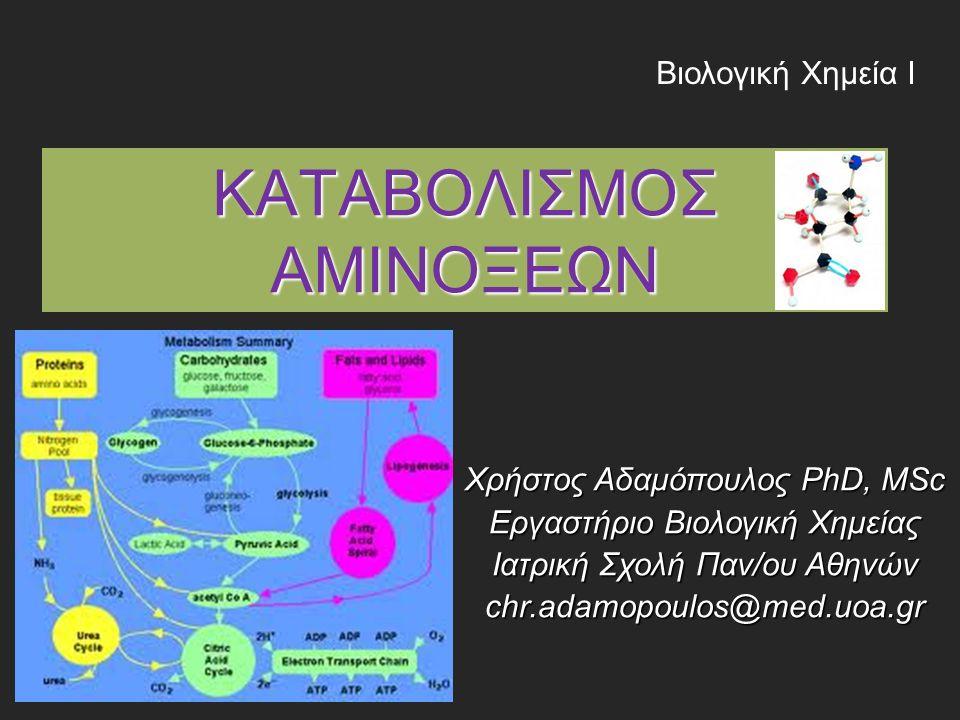 ΚΑΤΑΒΟΛΙΣΜΟΣ ΑΜΙΝΟΞΕΩΝ Βιολογική Χημεία Ι Χρήστος Αδαμόπουλος PhD, MSc Εργαστήριο Βιολογική Χημείας Ιατρική Σχολή Παν/ου Αθηνών chr.adamopoulos@med.uoa.gr