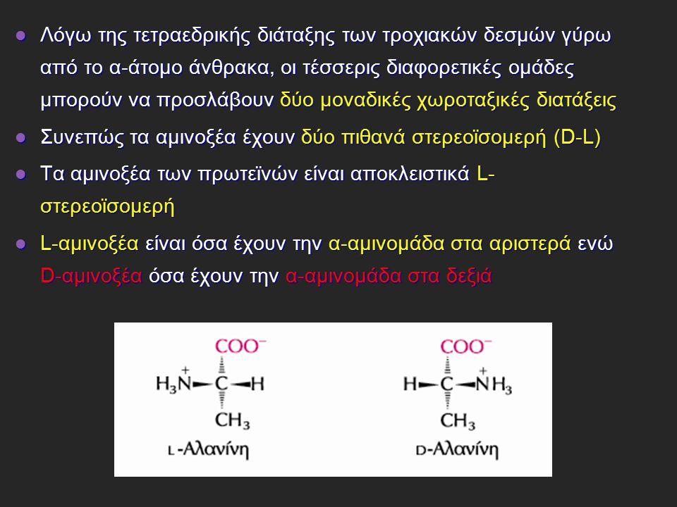 Λόγω της τετραεδρικής διάταξης των τροχιακών δεσμών γύρω από το α-άτομο άνθρακα, οι τέσσερις διαφορετικές ομάδες μπορούν να προσλάβουν δύο μοναδικές χωροταξικές διατάξεις Λόγω της τετραεδρικής διάταξης των τροχιακών δεσμών γύρω από το α-άτομο άνθρακα, οι τέσσερις διαφορετικές ομάδες μπορούν να προσλάβουν δύο μοναδικές χωροταξικές διατάξεις Συνεπώς τα αμινοξέα έχουν δύο πιθανά στερεοϊσομερή (D-L) Συνεπώς τα αμινοξέα έχουν δύο πιθανά στερεοϊσομερή (D-L) Τα αμινοξέα των πρωτεϊνών είναι αποκλειστικά L- στερεοϊσομερή Τα αμινοξέα των πρωτεϊνών είναι αποκλειστικά L- στερεοϊσομερή L-αμινοξέα είναι όσα έχουν την α-αμινομάδα στα αριστερά ενώ D-αμινοξέα όσα έχουν την α-αμινομάδα στα δεξιά L-αμινοξέα είναι όσα έχουν την α-αμινομάδα στα αριστερά ενώ D-αμινοξέα όσα έχουν την α-αμινομάδα στα δεξιά