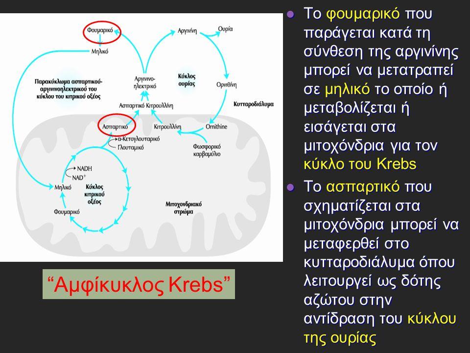 Το φουμαρικό που παράγεται κατά τη σύνθεση της αργινίνης μπορεί να μετατραπεί σε μηλικό το οποίο ή μεταβολίζεται ή εισάγεται στα μιτοχόνδρια για τον κύκλο του Krebs Το φουμαρικό που παράγεται κατά τη σύνθεση της αργινίνης μπορεί να μετατραπεί σε μηλικό το οποίο ή μεταβολίζεται ή εισάγεται στα μιτοχόνδρια για τον κύκλο του Krebs Το ασπαρτικό που σχηματίζεται στα μιτοχόνδρια μπορεί να μεταφερθεί στο κυτταροδιάλυμα όπου λειτουργεί ως δότης αζώτου στην αντίδραση του κύκλου της ουρίας Το ασπαρτικό που σχηματίζεται στα μιτοχόνδρια μπορεί να μεταφερθεί στο κυτταροδιάλυμα όπου λειτουργεί ως δότης αζώτου στην αντίδραση του κύκλου της ουρίας Αμφίκυκλος Krebs