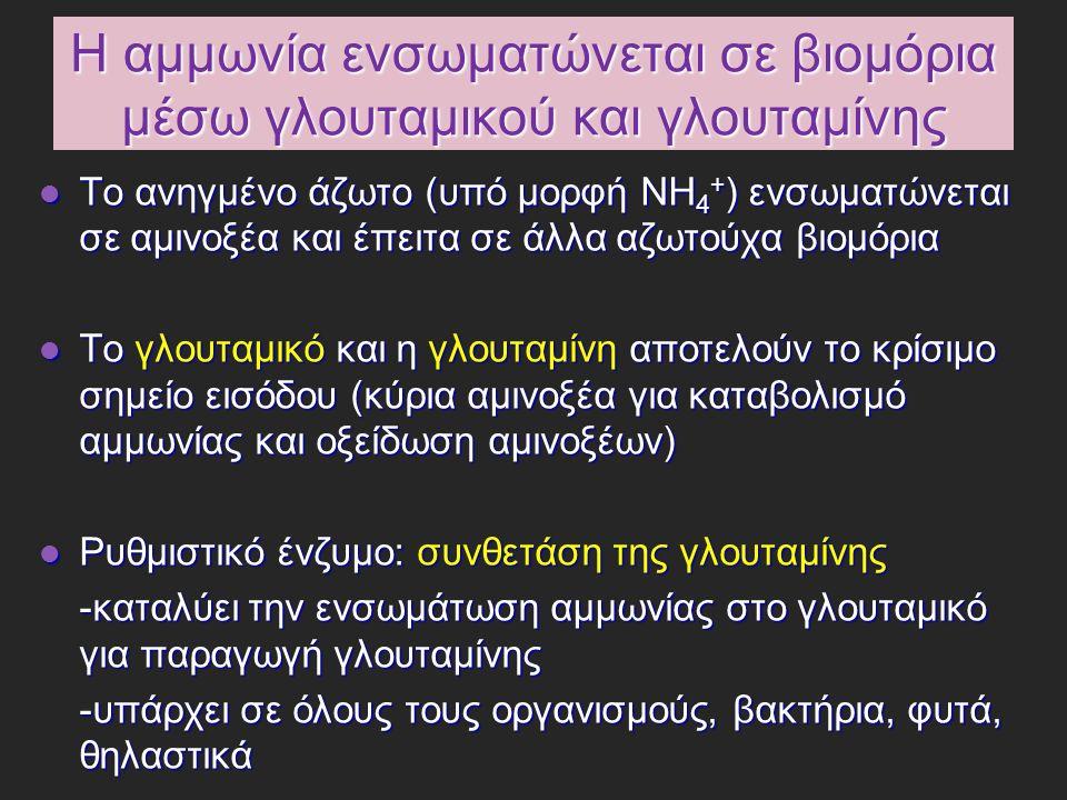 Μεταφορά της αμμωνίας Η αμμωνία είναι τοξική για τους ιστούς και τα επίπεδα της στο αίμα ρυθμίζονται προσεκτικά Η αμμωνία είναι τοξική για τους ιστούς και τα επίπεδα της στο αίμα ρυθμίζονται προσεκτικά Μεγάλο μέρος της ελεύθερης αμμωνίας μετατρέπεται σε μια μη τοξική ένωση, η οποία εξάγεται από τους εξωηπατικούς ιστούς στη κυκλοφορία του αίματος και μεταφέρεται στο ήπαρ ή τους νεφρούς Μεγάλο μέρος της ελεύθερης αμμωνίας μετατρέπεται σε μια μη τοξική ένωση, η οποία εξάγεται από τους εξωηπατικούς ιστούς στη κυκλοφορία του αίματος και μεταφέρεται στο ήπαρ ή τους νεφρούς