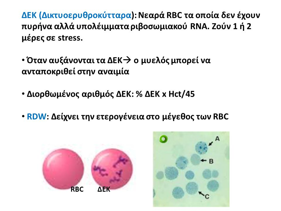 ΔΕΚ (Δικτυοερυθροκύτταρα): Nεαρά RBC τα οποία δεν έχουν πυρήνα αλλά υπολέιμματα ριβοσωμιακού RNA. Ζούν 1 ή 2 μέρες σε stress. Όταν αυξάνονται τα ΔΕΚ 