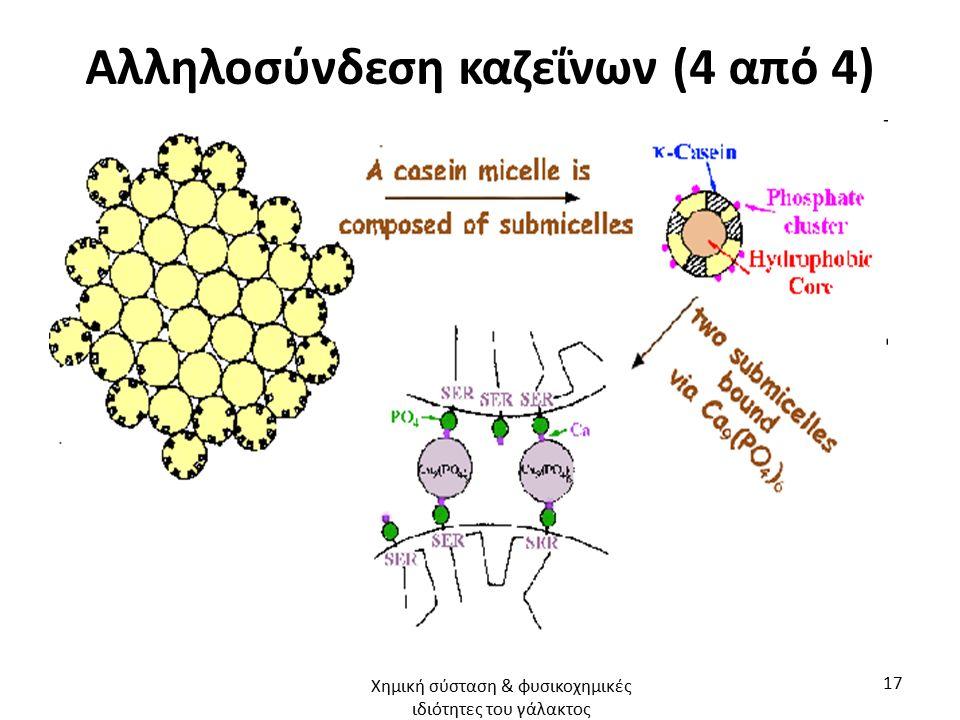 Αλληλοσύνδεση καζεΐνων (4 από 4) Χημική σύσταση & φυσικοχημικές ιδιότητες του γάλακτος 17