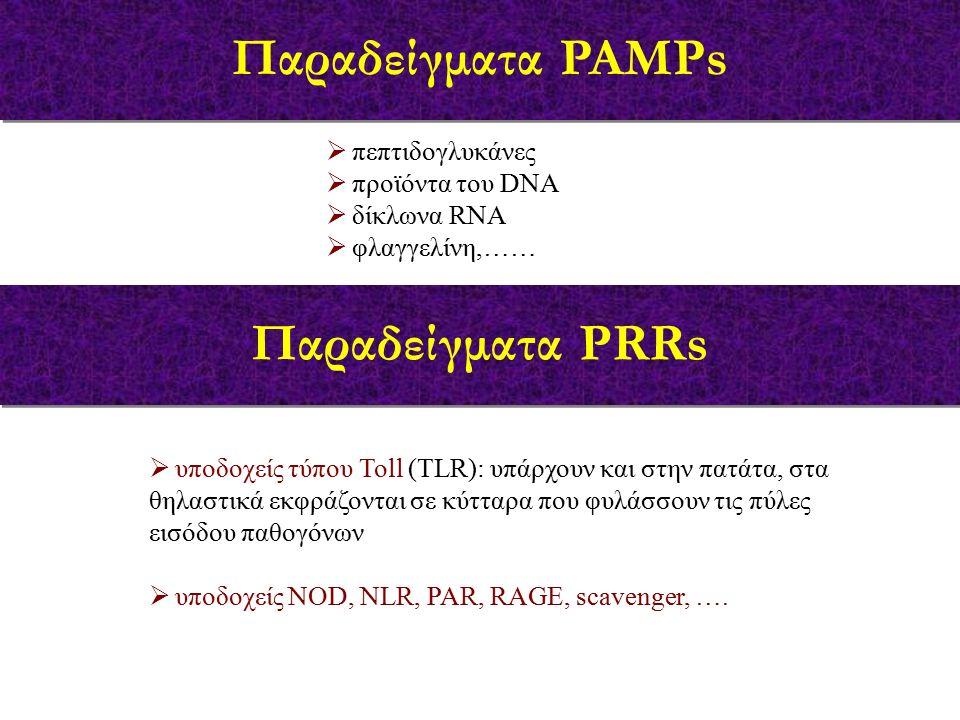  υποδοχείς τύπου Toll (TLR): υπάρχουν και στην πατάτα, στα θηλαστικά εκφράζονται σε κύτταρα που φυλάσσουν τις πύλες εισόδου παθογόνων  υποδοχείς NOD, NLR, PAR, RAGE, scavenger, ….