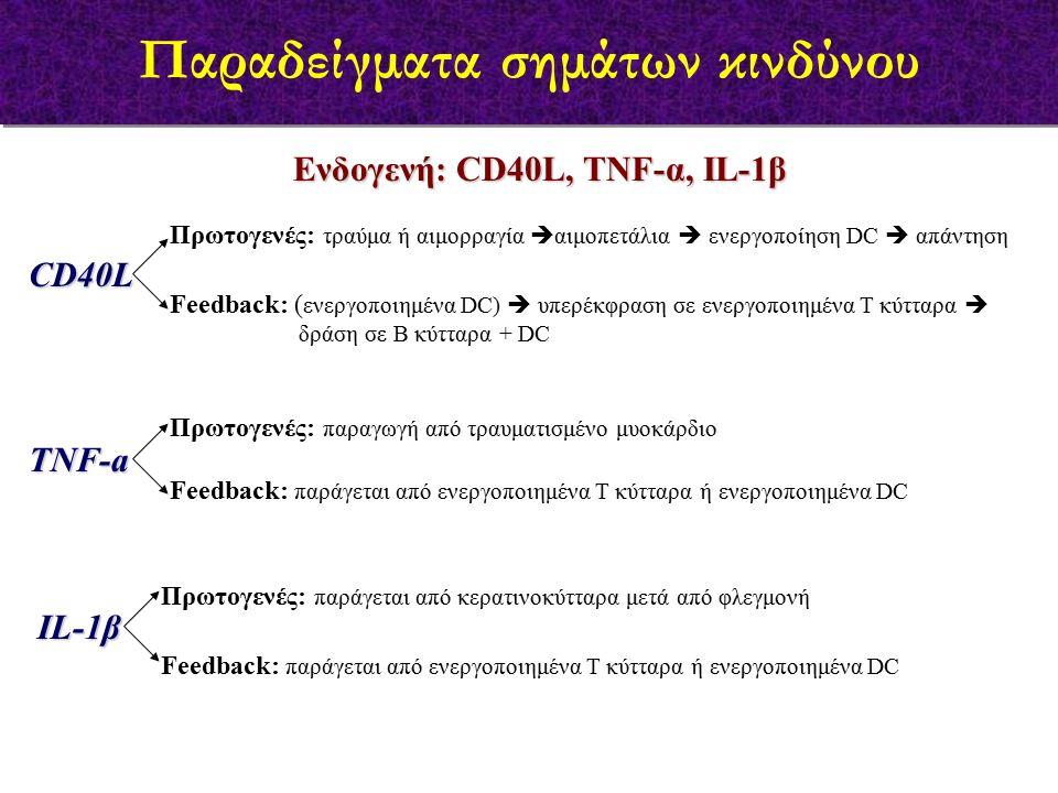 Ενδογενή: CD40L, TNF-α, IL-1β CD40L Πρωτογενές: τραύμα ή αιμορραγία  αιμοπετάλια  ενεργοποίηση DC  απάντηση ΤΝF-a IL-1β Πρωτογενές: παραγωγή από τραυματισμένο μυοκάρδιο Πρωτογενές: παράγεται από κερατινοκύτταρα μετά από φλεγμονή Feedback: ( ενεργοποιημένα DC)  υπερέκφραση σε ενεργοποιημένα Τ κύτταρα  δράση σε Β κύτταρα + DC Feedback: παράγεται από ενεργοποιημένα Τ κύτταρα ή ενεργοποιημένα DC Παραδείγματα σημάτων κινδύνου
