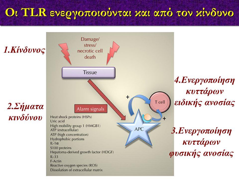 Οι TLR ενεργοποιούνται και από τον κίνδυνο 1.Κίνδυνος 3.Ενεργοποίηση κυττάρων φυσικής ανοσίας 2.Σήματα κινδύνου 4.Ενεργοποίηση κυττάρων ειδικής ανοσία