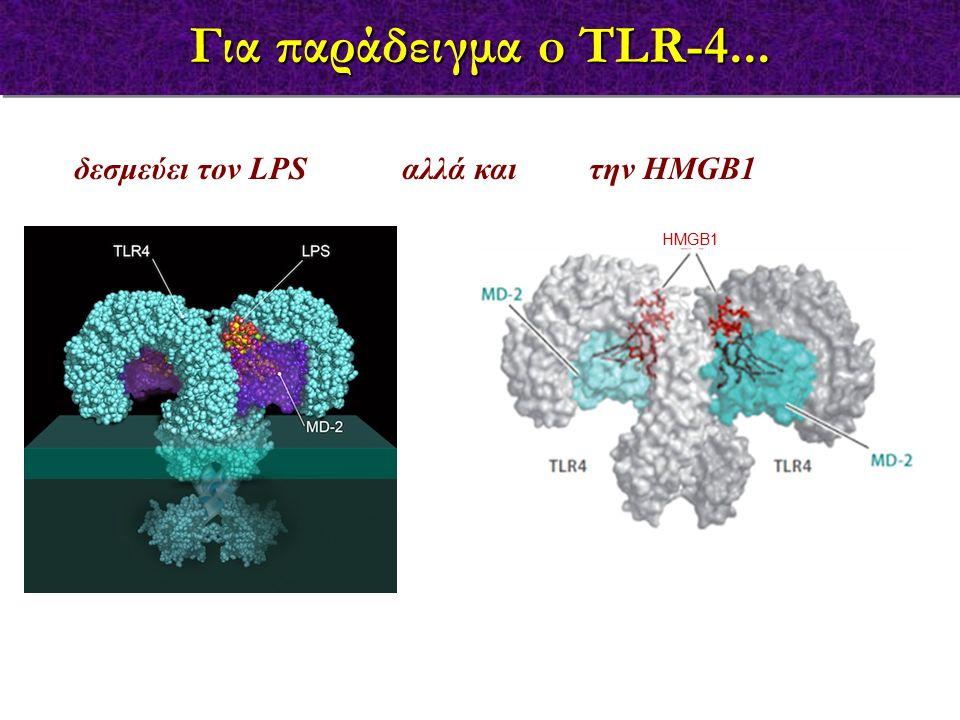 Για παράδειγμα o TLR-4... δεσμεύει τον LPS αλλά και την HMGB1 HMGB1