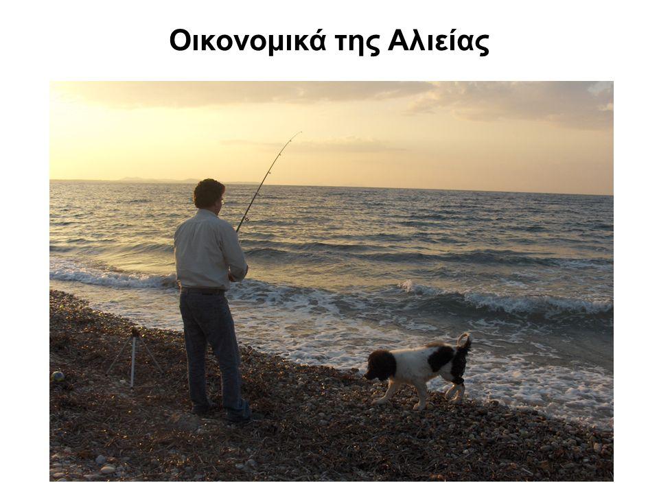 Οικονομικά της Αλιείας