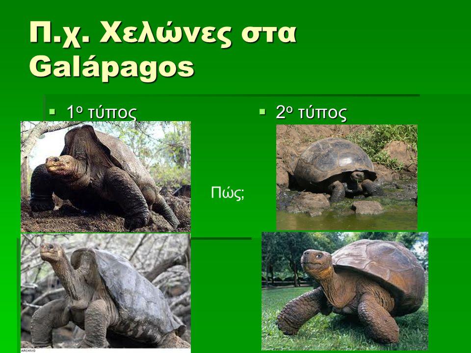 Π.χ. Χελώνες στα Galápagos  1 ο τύπος  2 ο τύπος Πώς;