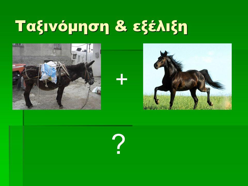 Ταξινόμηση & εξέλιξη + ?