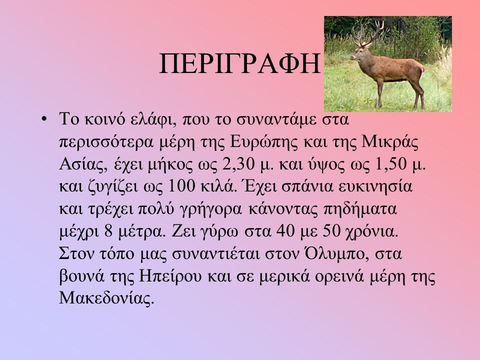 ΠΕΡΙΓΡΑΦΗ Το κοινό ελάφι, που το συναντάμε στα περισσότερα μέρη της Ευρώπης και της Μικράς Ασίας, έχει μήκος ως 2,30 μ.