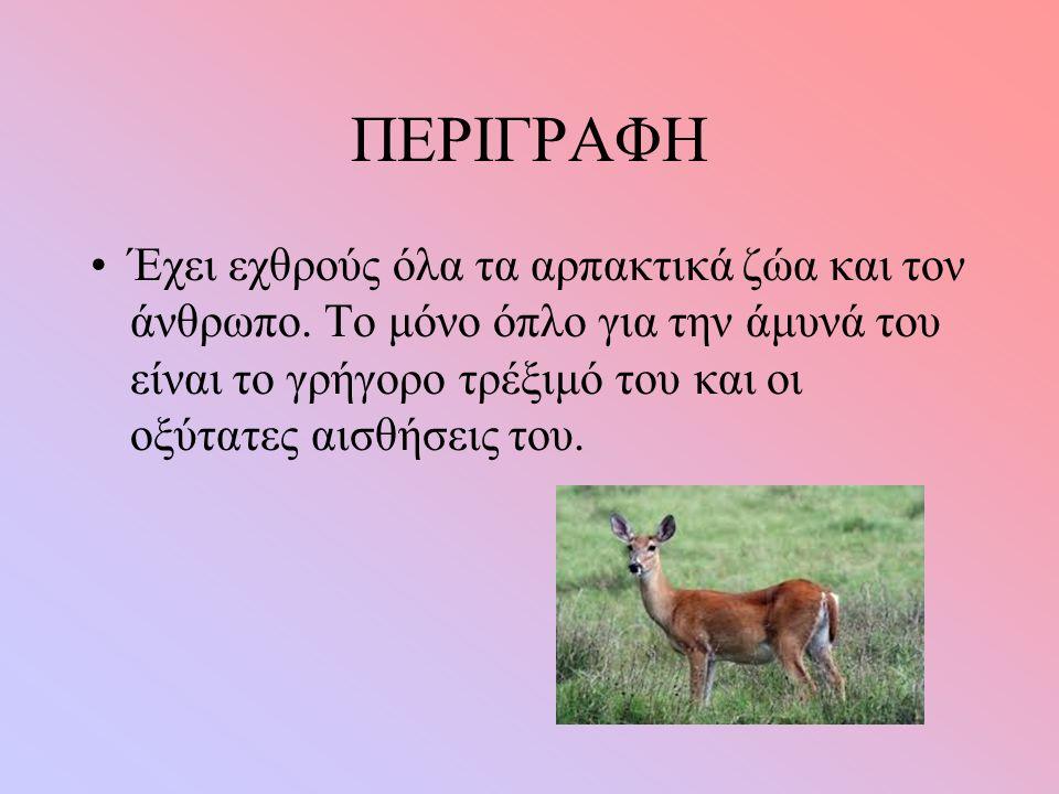 ΠΕΡΙΓΡΑΦΗ Έχει εχθρούς όλα τα αρπακτικά ζώα και τον άνθρωπο.