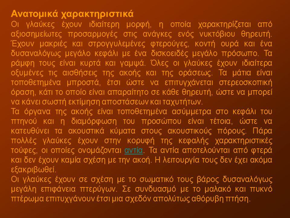 Το κοινό ελάφι, που το συναντάμε στα περισσότερα μέρη της Ευρώπης και της Μικράς Ασίας, έχει μήκος ως 2,30 μ.