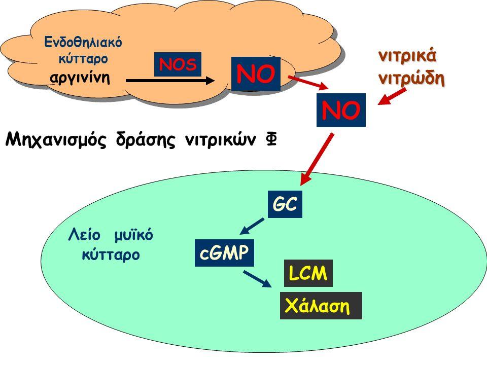 NO GC cGMP LCM Χάλαση NOS NO αργινίνη Ενδοθηλιακό κύτταρο Λείο μυϊκό κύτταρο νιτρικάνιτρώδη Μηχανισμός δράσης νιτρικών Φ